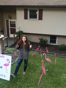 Flamingos bring smiles during quarantine.