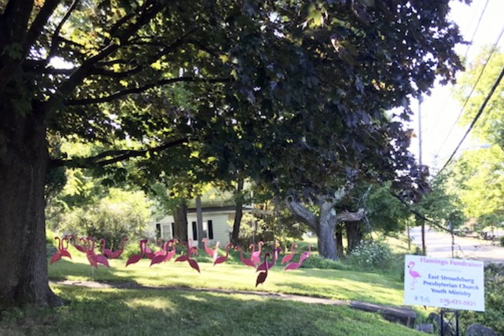 Youth Flamingo Fundraiser | Flamingos cover the lawn..
